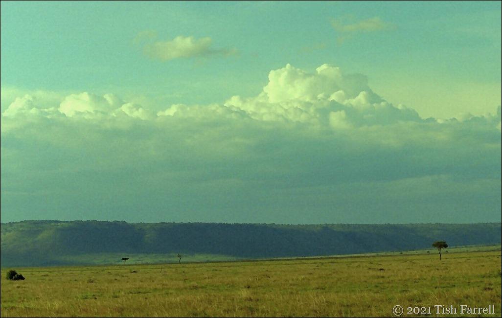 wide Mara 7